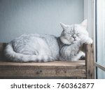 Stock photo cute cat sleeping on wooden shelf under light from a window 760362877