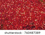 carlisle  ma  usa   october 17  ... | Shutterstock . vector #760487389