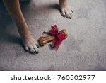 gift bone between dog paws on...   Shutterstock . vector #760502977