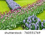 flowerbed with tulips and... | Shutterstock . vector #760551769