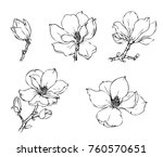 ink  pencil   the leaves and... | Shutterstock .eps vector #760570651