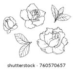 ink  pencil   the leaves and... | Shutterstock .eps vector #760570657