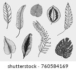 tropical or exotic leaves  leaf ... | Shutterstock .eps vector #760584169