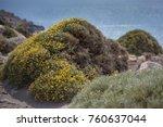 small yellow flowers closeup.... | Shutterstock . vector #760637044