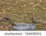 two robins take time for a... | Shutterstock . vector #760658551