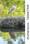 black crowned night heron... | Shutterstock . vector #760667509