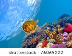 tube coral and turtle. shot in... | Shutterstock . vector #76069222