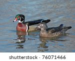 A Wood Duck And Its Mate On Th...