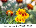 flowers and bees | Shutterstock . vector #760716319