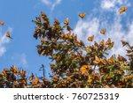 monarch butterflies in monarch... | Shutterstock . vector #760725319