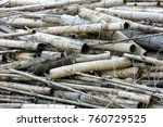 Small photo of Bamboo of accumulation place accumulated for many years and neglected abandoned