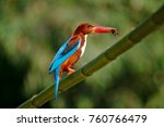 king fisher with victim in my... | Shutterstock . vector #760766479