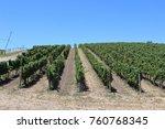 Small photo of Napa Wine Country