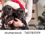 Stock photo year of dog holiday celebration new year cute puppy at female hand pet and animal dog year 760785559