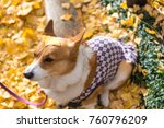 dogs have yellowing leaves on... | Shutterstock . vector #760796209