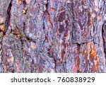 colorful pine bark in the forest | Shutterstock . vector #760838929