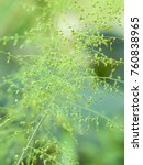 fresh green leaf with clear... | Shutterstock . vector #760838965