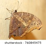 beautiful butterfly isolated | Shutterstock . vector #760845475