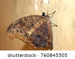 beautiful butterfly isolated | Shutterstock . vector #760845505