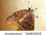 beautiful butterfly isolated | Shutterstock . vector #760845535