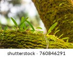 orchids and green moss  on the... | Shutterstock . vector #760846291