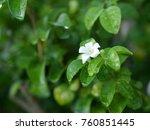 white flowers on the green | Shutterstock . vector #760851445