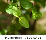 a small leaf on a green... | Shutterstock . vector #760851481