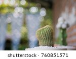 cactus cactus in a potted plant ... | Shutterstock . vector #760851571