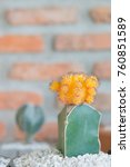 cactus cactus in a potted plant ... | Shutterstock . vector #760851589