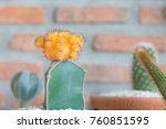 cactus cactus in a potted plant ... | Shutterstock . vector #760851595