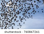 birds in the background of the... | Shutterstock . vector #760867261