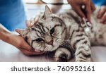Stock photo cropped image of handsome doctor veterinarian and his attractive assistant at vet clinic are 760952161