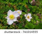 flower in focus on the left... | Shutterstock . vector #761014555