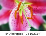 lilies are a group of flowering ... | Shutterstock . vector #76103194