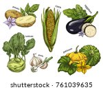 natural vegetable healthy food... | Shutterstock .eps vector #761039635