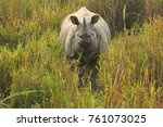one horned indian rhinoceros in ... | Shutterstock . vector #761073025