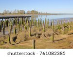 wooden posts that once... | Shutterstock . vector #761082385