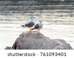 Two Seagulls Standing On Rocks...