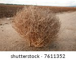 """A Tumble Weed Aka """"salsola"""" ..."""