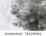 Fir Tree Branche Covered With...