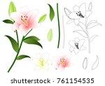 lilium candidum  the madonna... | Shutterstock .eps vector #761154535