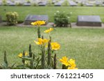 Yellow Cemetery Flowers In The...