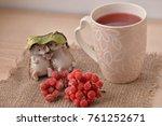 cup of tea viburnum  viburnum...   Shutterstock . vector #761252671