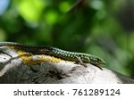 a lizard warms under the rays... | Shutterstock . vector #761289124