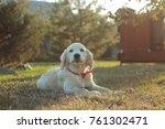 Stock photo puppy dog golden retriever in sunny spring light 761302471