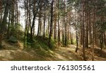 dirty clay road in a coniferous ... | Shutterstock . vector #761305561