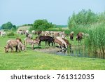 donkey in the nature | Shutterstock . vector #761312035