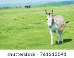donkey in the nature | Shutterstock . vector #761312041