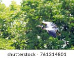 grey heron  ardea cinerea  in... | Shutterstock . vector #761314801