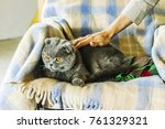 human's hand is stroking... | Shutterstock . vector #761329321